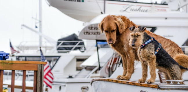 Dog-friendly yachts Looking for dog-friendly yachts? We have three examples DESTAQUE